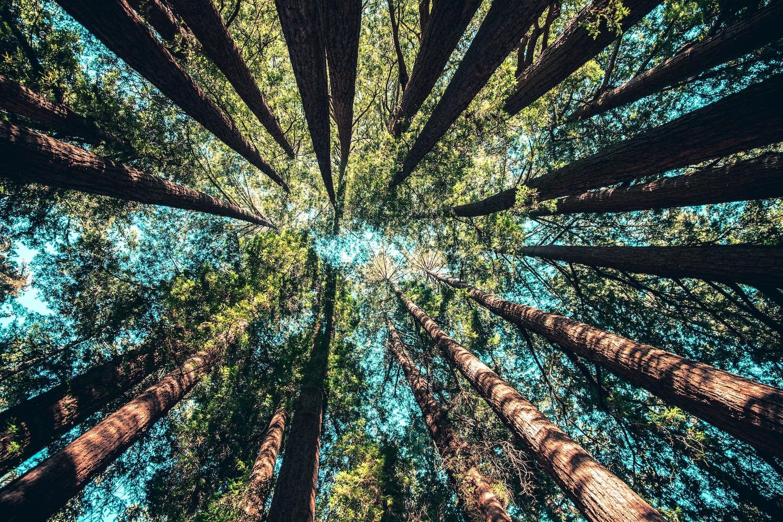 Comment we advocacy vous aide à réduire votre empreinte carbone